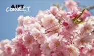 April AJET Connect