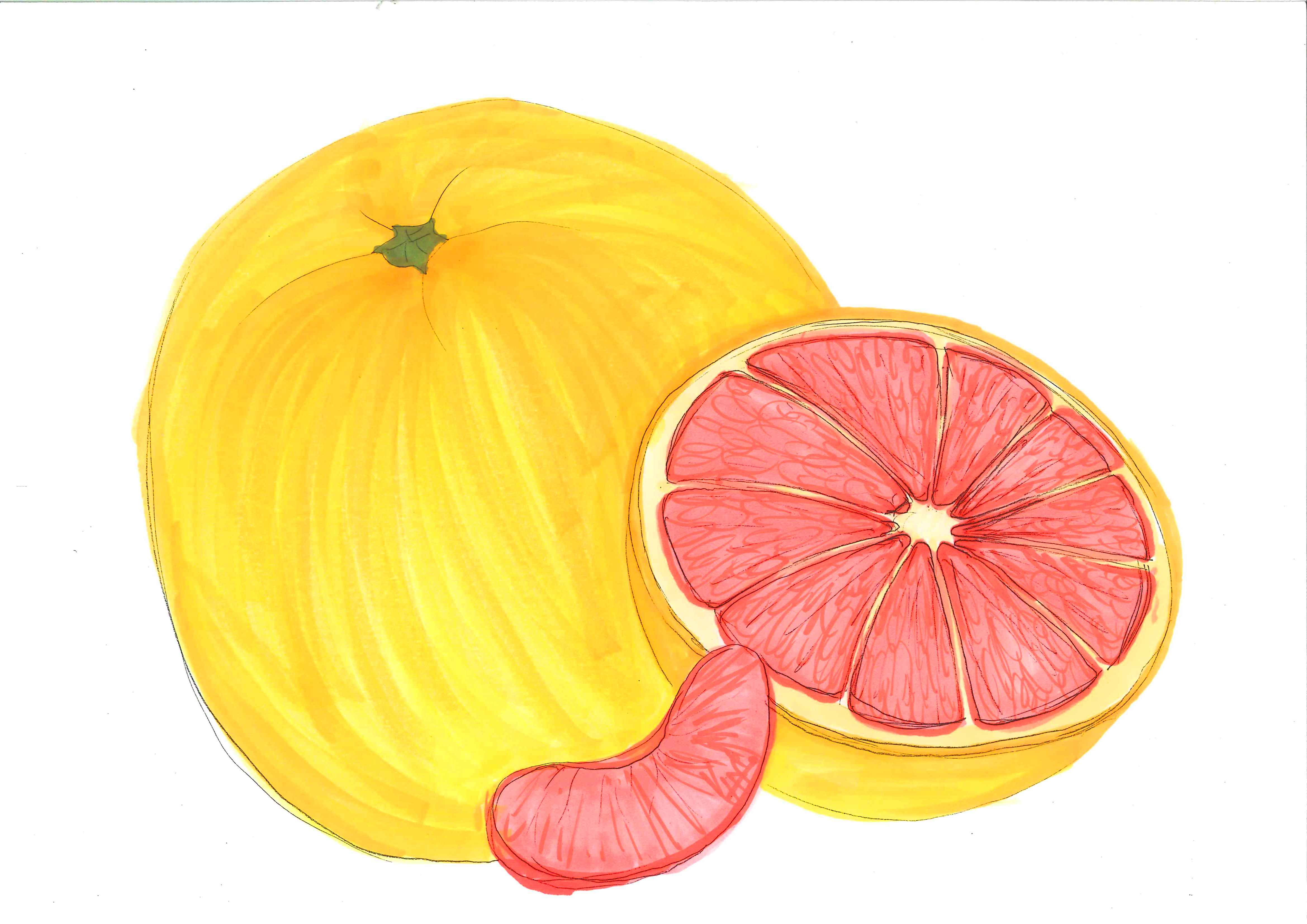 Displaying 17> Images For - Grapefruit Clipart...