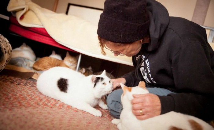Tales of the Japan Cat Network